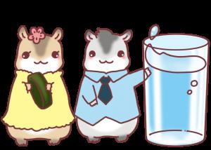 couple-hamster11